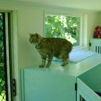 04-homestead-cattery-ashhurst-palmerston-north-4.jpg